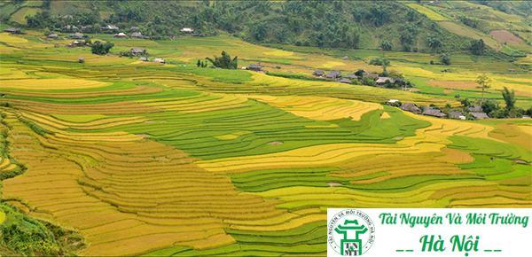 Cách tính diện tích đất nông nghiệp chi tiết nhất 2019