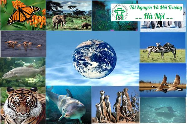 Môi trường sống là gì? Có bao nhiêu loại môi trường tự nhiên?